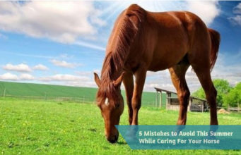 5 Mistakes to Avoid This Summer While Caring For Your Horse