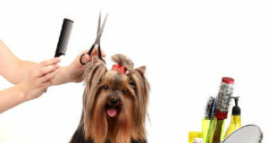 How To Improve Your Pet-grooming Business