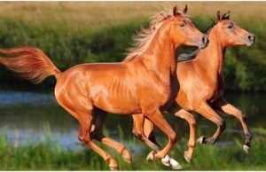 21 Interesting Horse Facts You Need To Know About