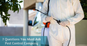 7 Questions You Must Ask Pest Control Company before Hiring