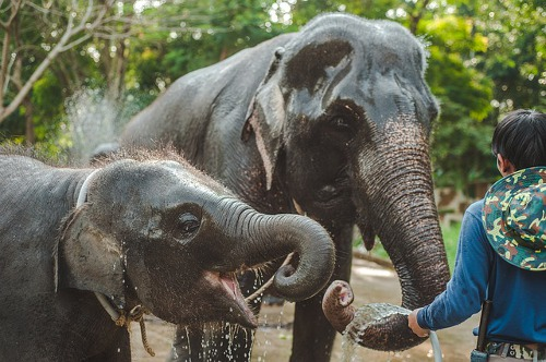 Elephant Welfare Program