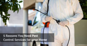 5 Reasons You Need Pest Control Services for your Home
