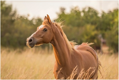 5 Mistakes to Avoid When Buying Your First Horse