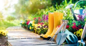 Top 10 tips to stay fit by Home Gardening