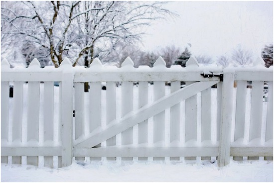 What are the best kind of wood for fencing
