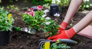 3 Easy and Reliable Ways to Upgrade Your Home Garden