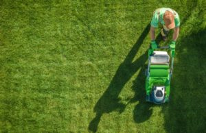 5 Lawn Hacks to Revive Your Brown Lawn