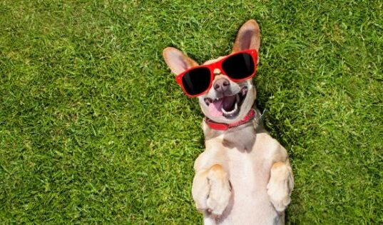 5 Ways to Ensure the Safety of Dogs Outdoors