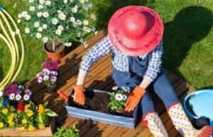 NDIS Gardening Maintenance