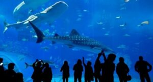 Educational Activities At Dubai Aquarium And Zoo - A Brief Guide