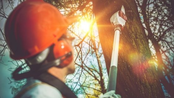 Maintain The Health Of Your Tree By Employing A Tree Removal Company