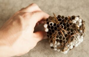 4 Tips for Removing a Wasp Nest