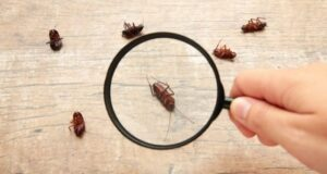 5 Signs Your Home Needs a Pest Inspection